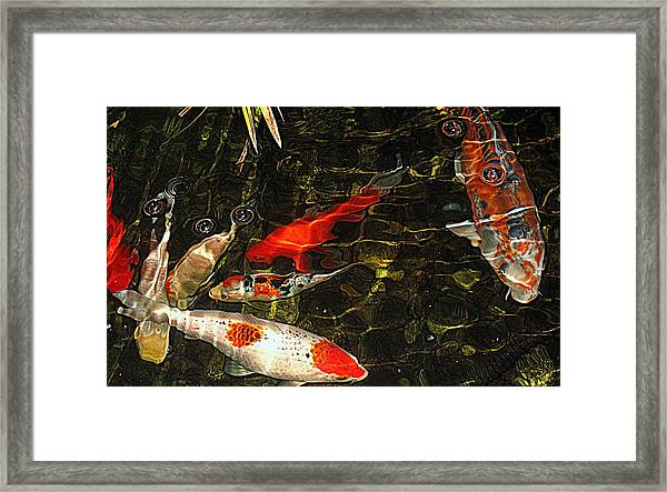 Koi Joy Framed Print