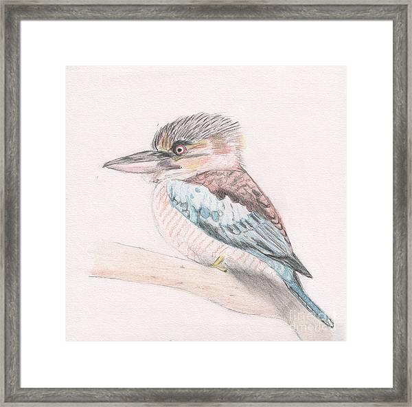 Kookaburra Cuteness Framed Print