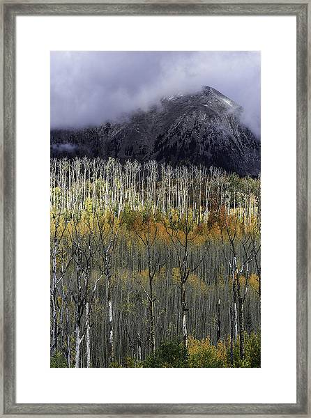 La Sal Seasonings Framed Print