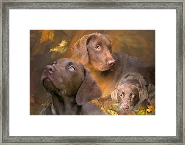 Lab In Autumn Framed Print