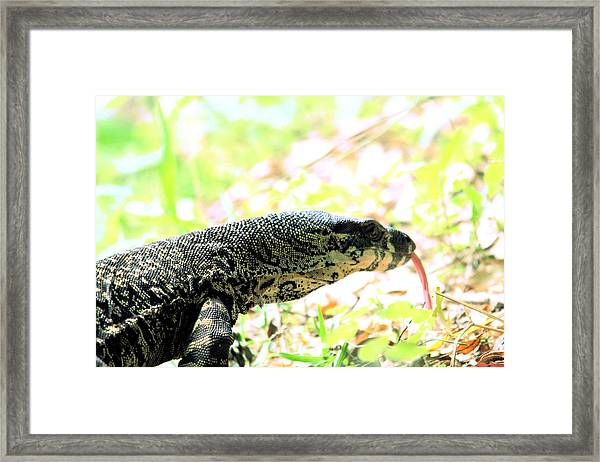 Lace Monitor Profile Framed Print