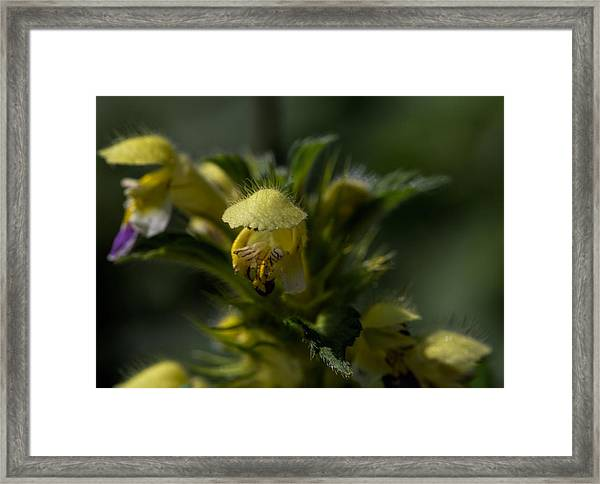 Lady In Yellow Dress Framed Print