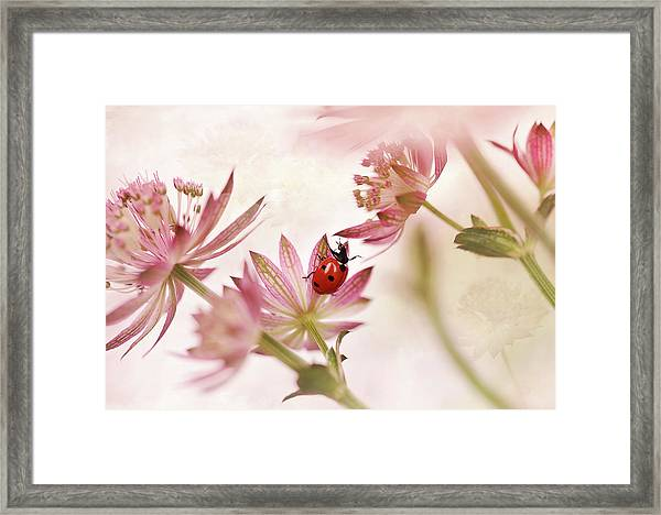 Ladybird And Pink Flowers Framed Print