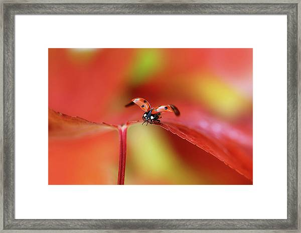 Ladybird In Autumn Framed Print