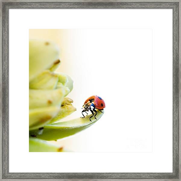 Ladybird On Desert Flower Framed Print