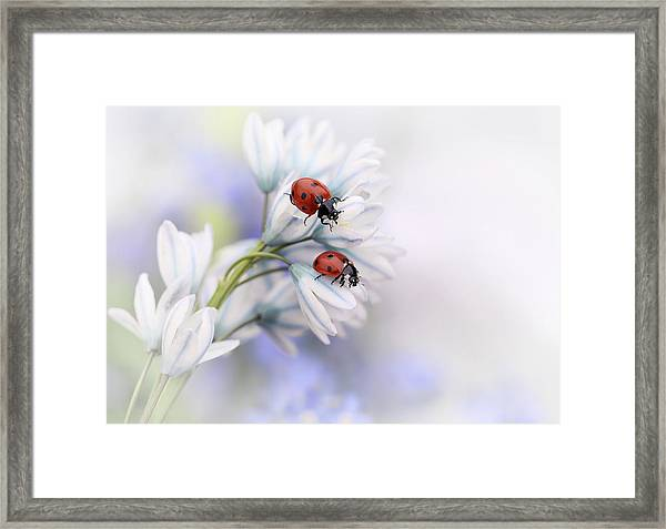 Ladybirds Framed Print
