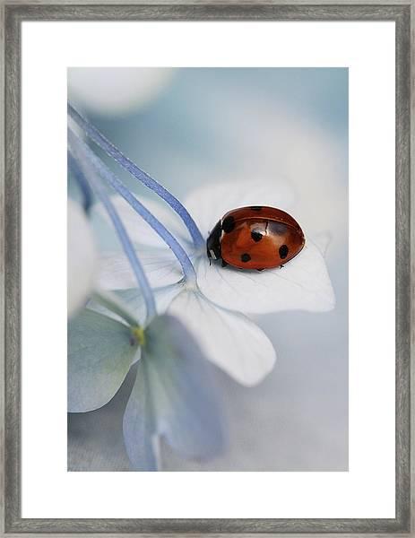 Ladybug Framed Print by Ellen Van Deelen