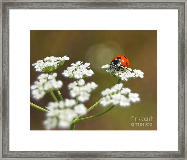 Ladybug In White Framed Print