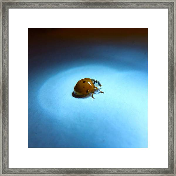 Ladybug Under Blue Light Framed Print