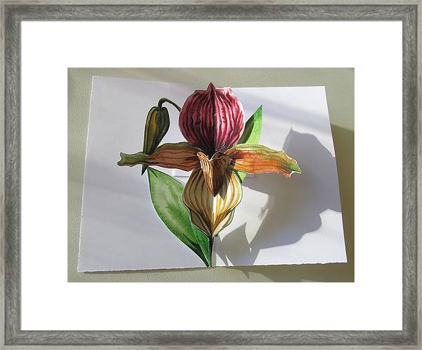 Ladyslipper Pop Up Card Framed Print
