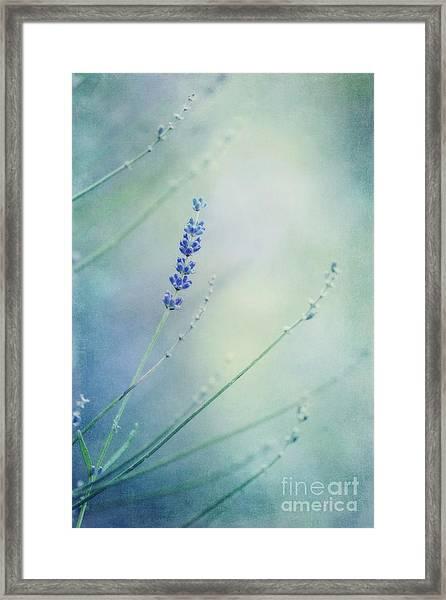 Laggard Framed Print