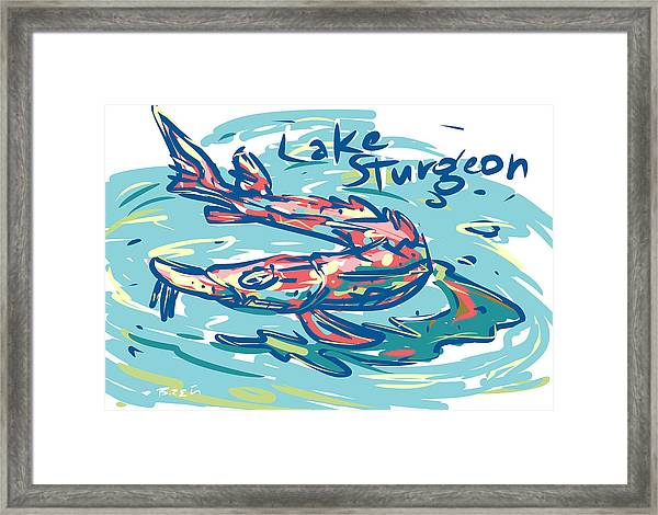 Lake Sturgeon Framed Print