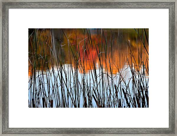 Lakeside Tales Framed Print