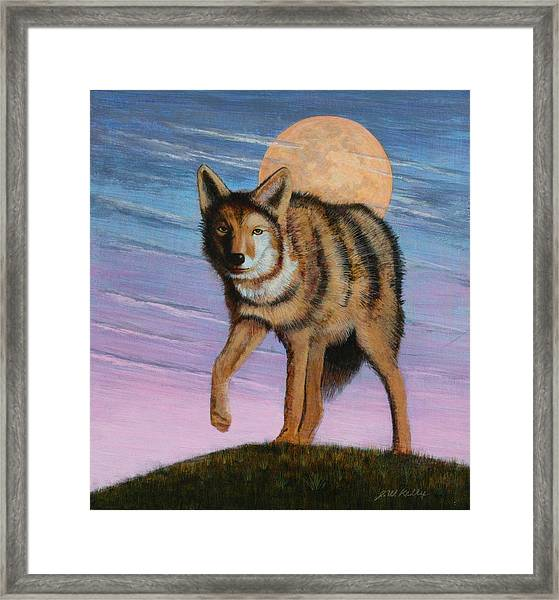 Lame Coyote Framed Print by J W Kelly