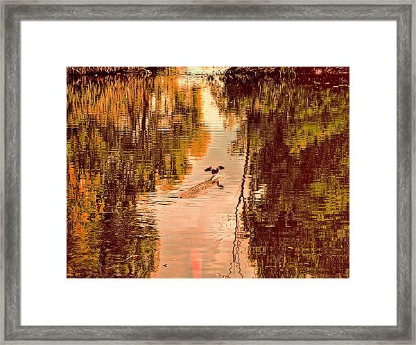 Landing Duck Absrtact Framed Print