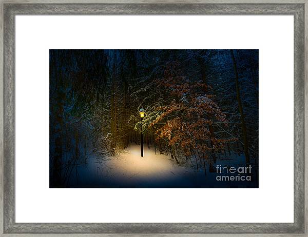 Lantern In The Wood Framed Print