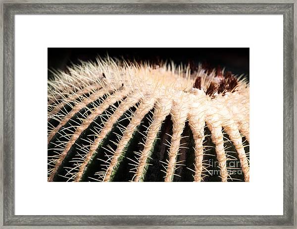 Large Cactus Ball Framed Print