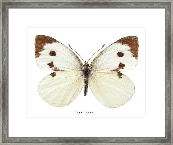 Large White Framed Print