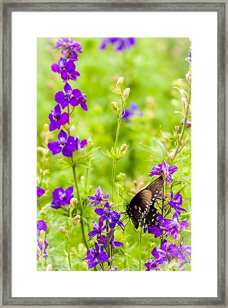 Larkspur Visitor Framed Print