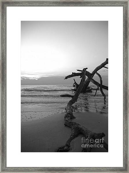 Framed Print featuring the photograph Last Chance by Glenda Wright