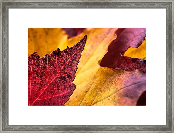 Last Days Of Fall Framed Print