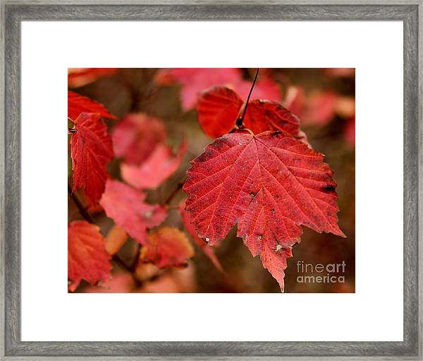 Last Fall Colors Framed Print