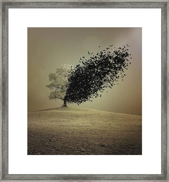 Last Hope Framed Print by Radin Badrnia