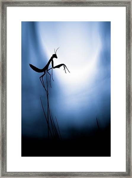 Last Night On Earth Framed Print by Fabien Bravin