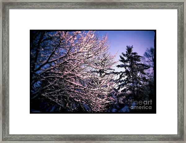 Last Peek Of Winter Sun Framed Print