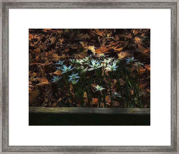 Last Year's Leaves Framed Print