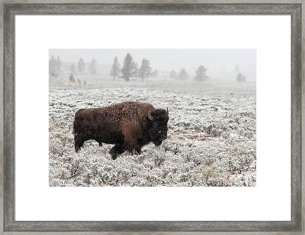 Late Fall Yellowstone Framed Print