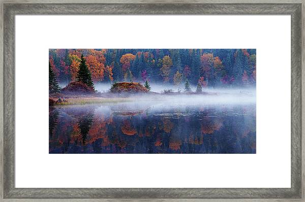 Laurentian Forest Framed Print by Mircea Costina