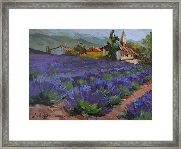 Lavandin En Fleur Framed Print
