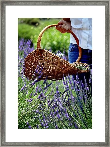 Lavender And Basket Framed Print