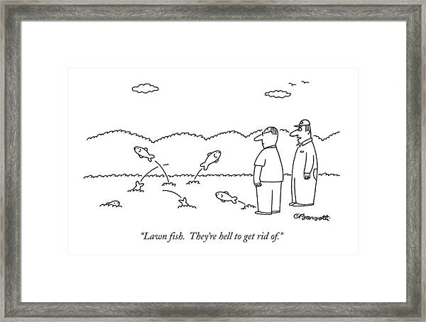 Lawn Fish.  They're Hell To Get Rid Of Framed Print