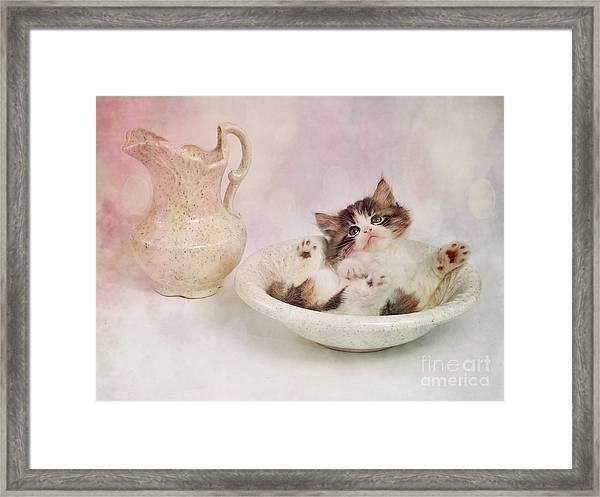 Lazy Bathing Cat Framed Print