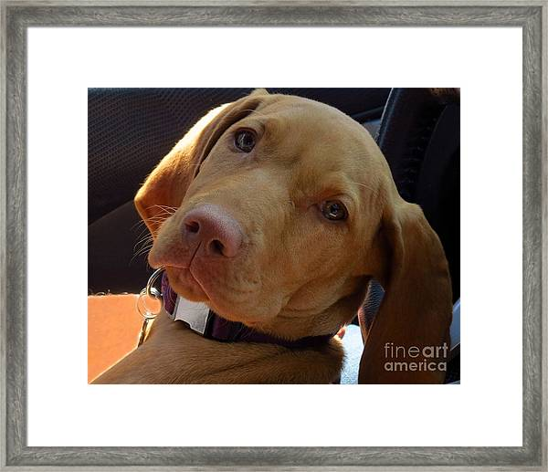 Lazy Dazy Dog Framed Print