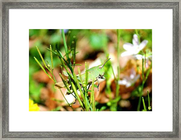 Framed Print featuring the photograph Lazy Grasshopper  by Candice Trimble