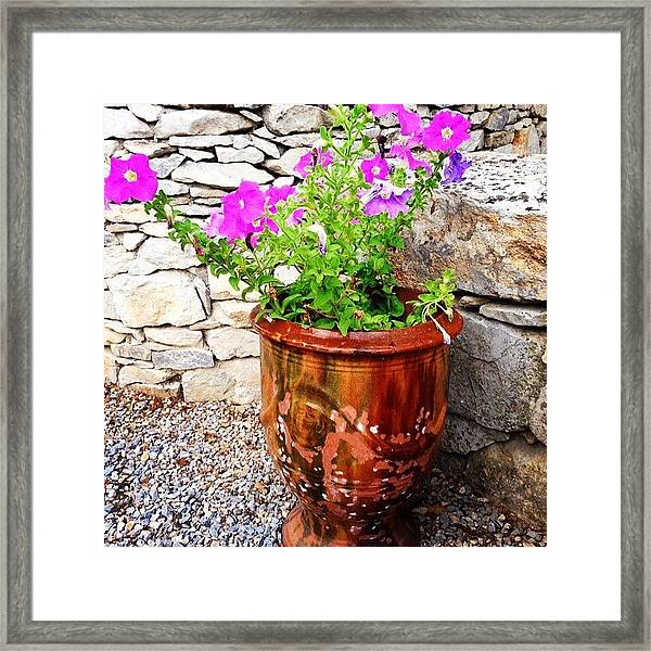 Anduze Flower Pot With Petunias Framed Print