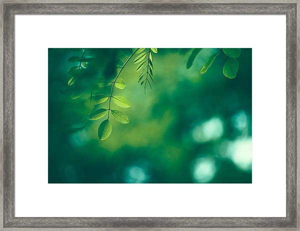 Leaf Background Framed Print by Jasmina007