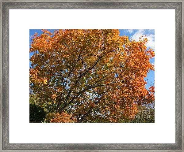 Leaf Canopy Framed Print