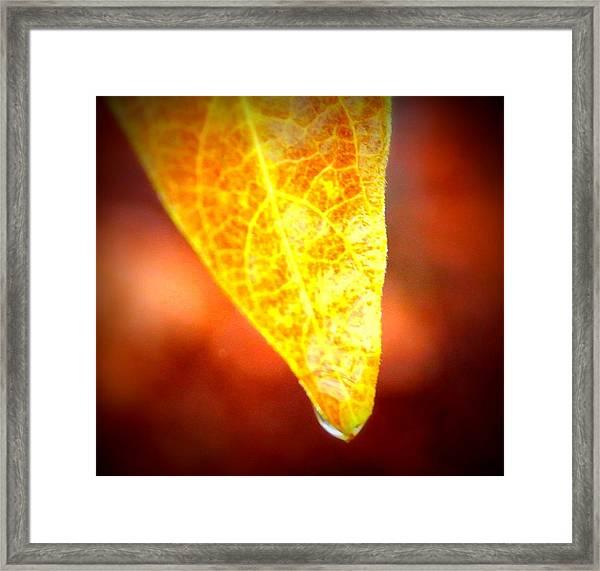 Leaf Drop Framed Print