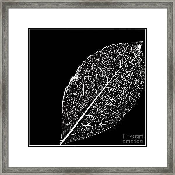 Leaf In Filigree Framed Print