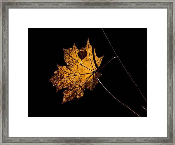 Leaf Leaf Framed Print