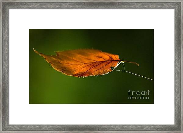 Leaf On Spiderwebstring Framed Print