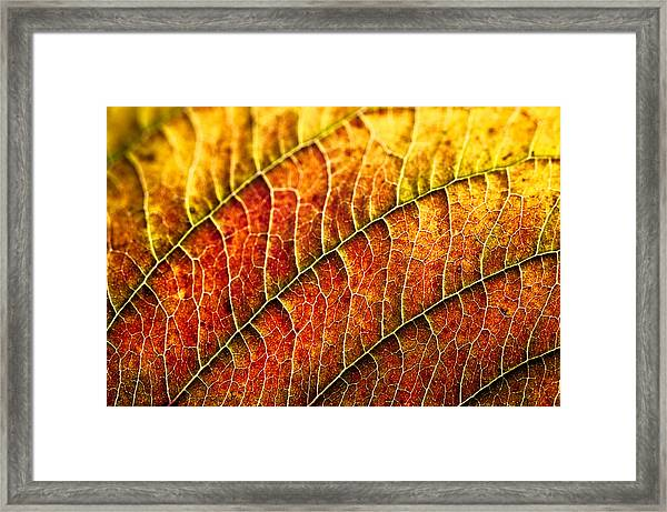 Leaf Rainbow Framed Print