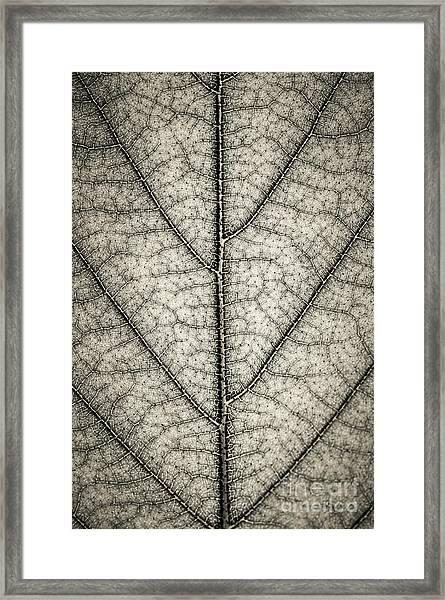 Leaf Texture In Sepia Framed Print