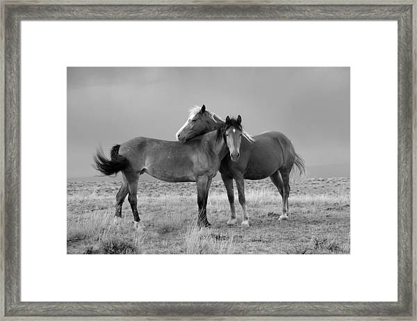 Lean On Me B And W Wild Mustang Framed Print