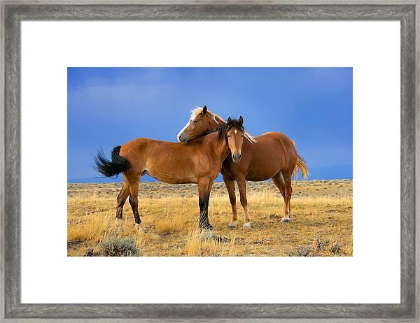 Lean On Me Wild Mustang Framed Print