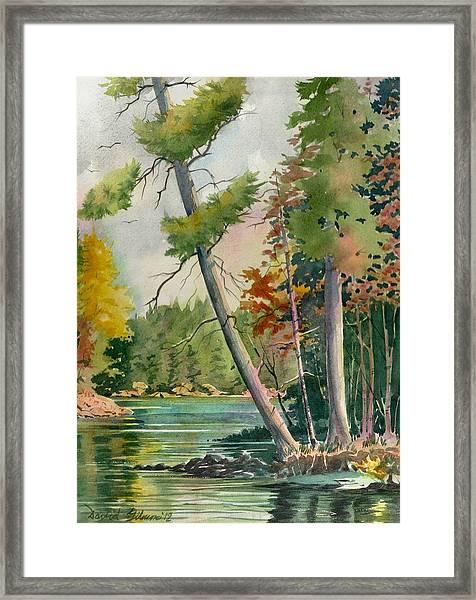 Leaning Pine Framed Print